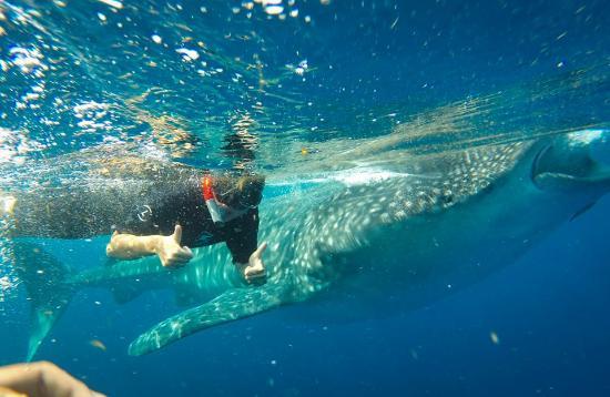 La Paz Whale Sharks VIP Tours