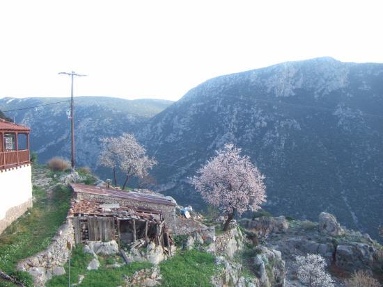 Landscape - Hotel Acropole Delphi Photo