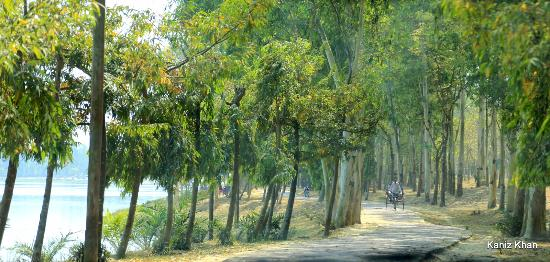 Dinajpur, Bangladesch: The road alongside the tank