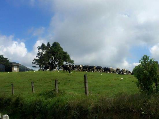 Landscape - The Hill Club Photo