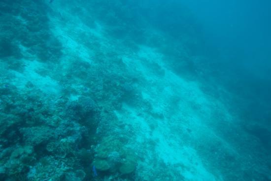 Oasis Resort: Damaged Reef