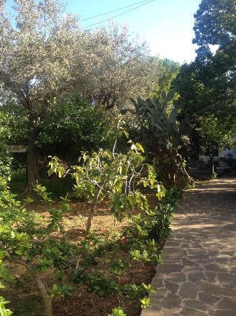 Il giardino di silvia hotel palermo sicilia prezzi - Il giardino di ballaro palermo ...