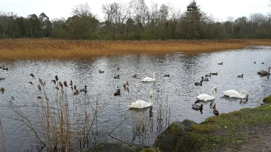 County Laois, Irlandia: Beautiful place to visit with the family!!