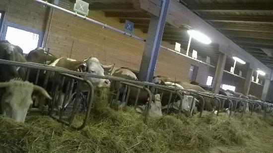 Farm stay holiday La Pera Doussa Photo