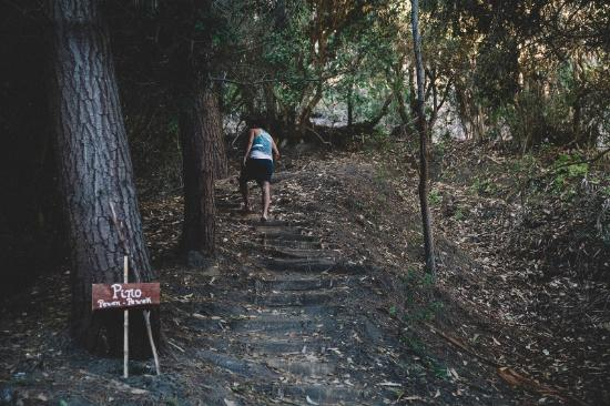 Matanzas, Chile: Bosque