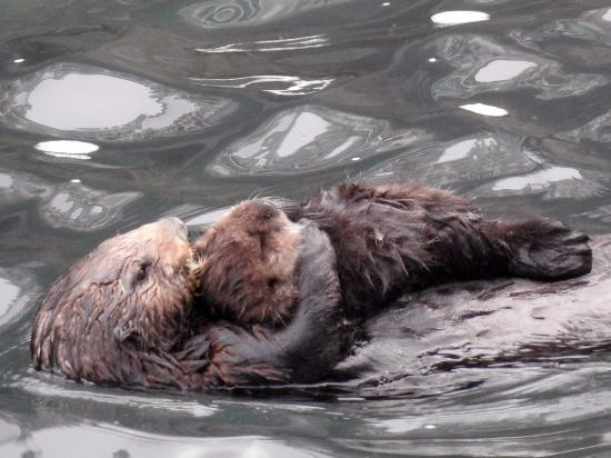 Coastview Inn: Spotted some sea otters just offshore too!