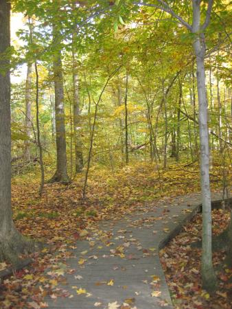 Kenton, OH: pathway at Lawrence woods
