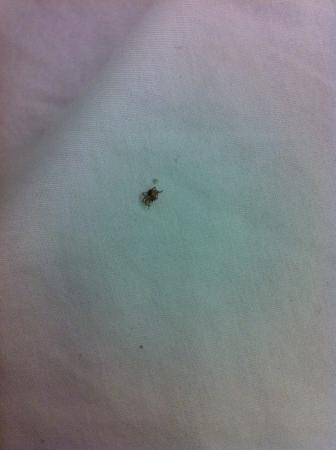 Microtel Inn & Suites by Wyndham Marianna : Spider on bed