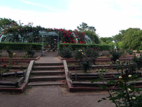 Sayama, Japan: 薔薇園