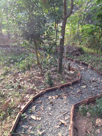 Changanacherry, India: Ahimsa Garden paths to Inspire...
