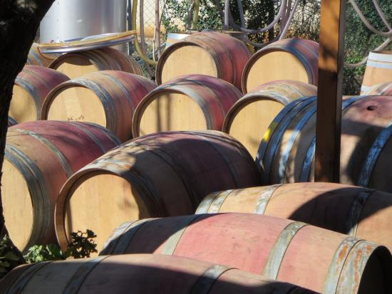 Wine Tours in Israel with Israel Wine Journeys