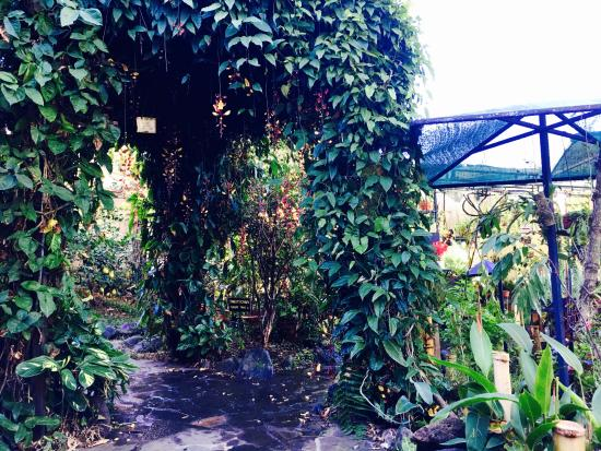 Pura Vida Hotel: some of the many tropical plants in the garden