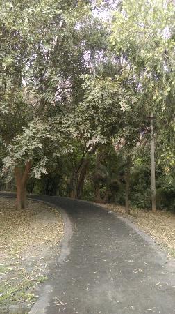 Garden of Fragrance: IMAG2918_large.jpg