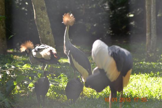 Hibou picture of parque das aves foz do iguacu for Houpette oiseau