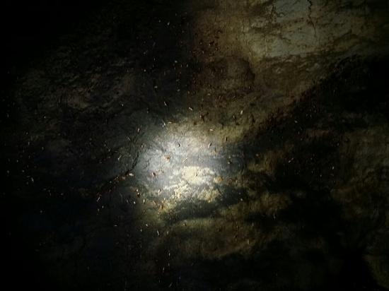 Gomantong Cave Sandakan Photo
