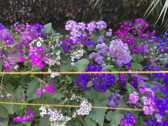 Sahelion Ki Bari: Flowers In The Garden