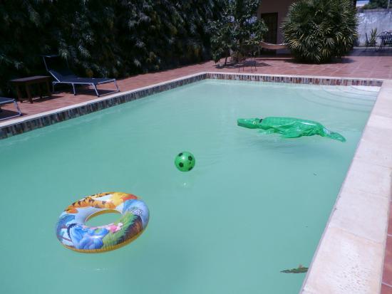 B & B Villa Calliandra : pool