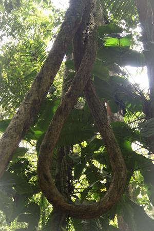 La Reserva Nacional Forestal Bosque de Yotoco