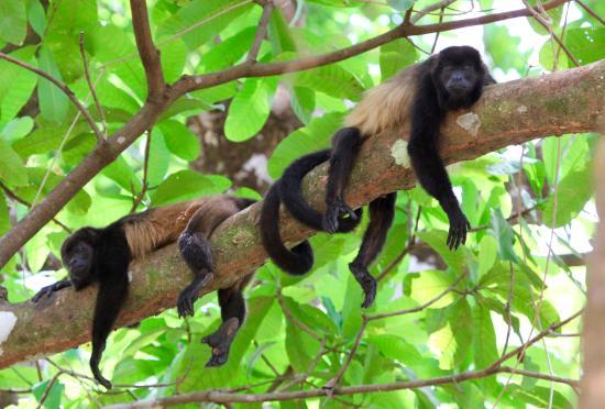 Howler Monkey Hotel Reviews