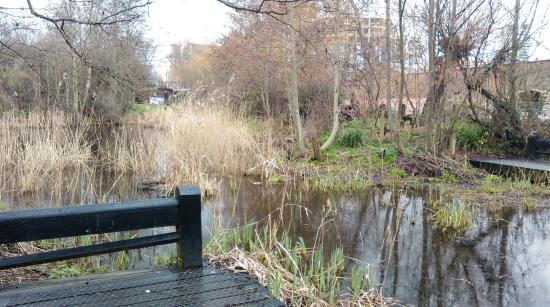 卡姆利街自然公园