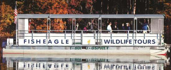Fish Eagle Wildlife Tours