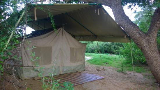 Lion King Bush Camp: Sausage tree tent, one of my favorite