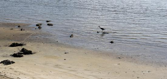 Jensen Beach, FL: Bird at Indian River