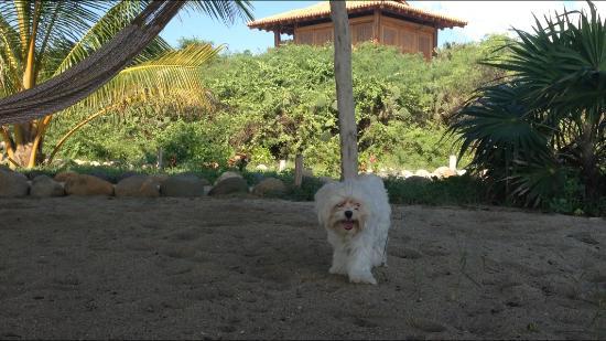 Playa Viva Foto
