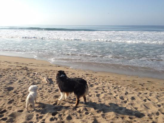 Mi perro fué el más feliz jugando con Viva, la perra que vive en Playa Viva!