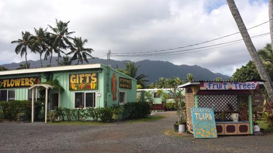 Waiahole Nursery And Garden Center Bistro, Kaneohe   Restaurant Reviews,  Phone Number U0026 Photos   TripAdvisor