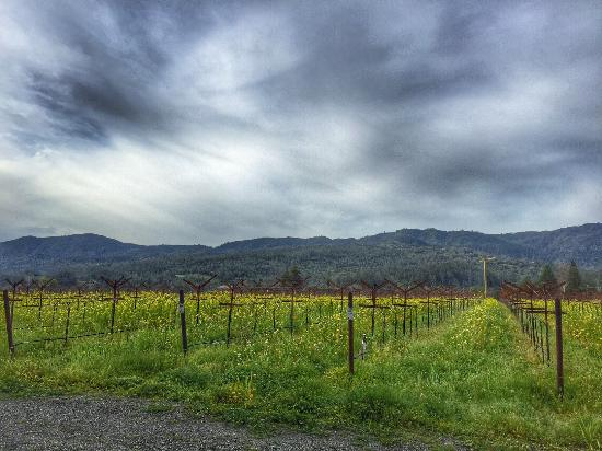 Harvest Inn by Charlie Palmer: Magnificent St. Helena as seen from the Harvest Inn.