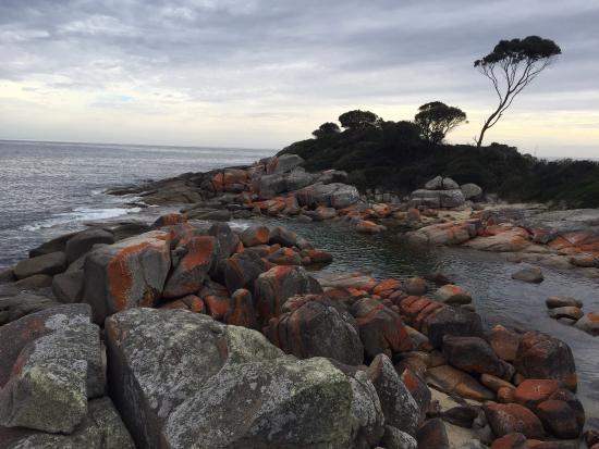 Tazmanya, Avustralya: photo0.jpg