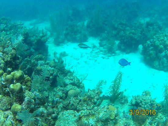 Anemona Divers: Coral Reef
