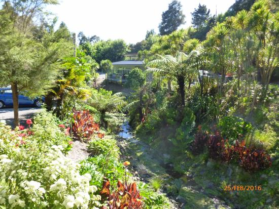 Whangarei Quarry Gardens: A view of the little stream