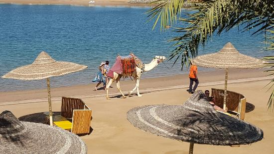 Desert Rose Resort Hurghada Thank You From Rooms 8217 And 8218 For