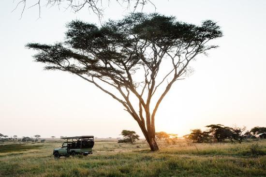 Namiri Plains, Asilia Africa: Morning Game Drives in the Serengeti