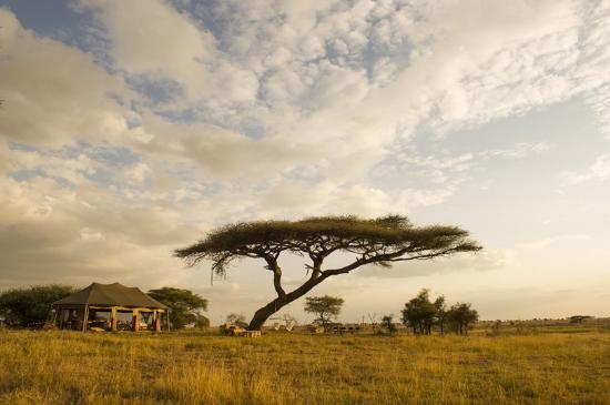 Namiri Plains, Asilia Africa: Exterior view of your tent at Namiri