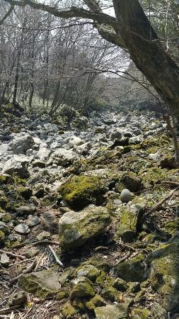 Seogwipo Natural Recreation Forest: 20160315_120015_large.jpg