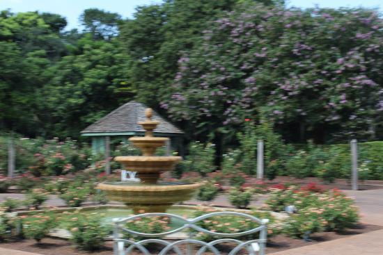Jardim das Rosas  Photo de Harry P Leu Gardens, Orlando