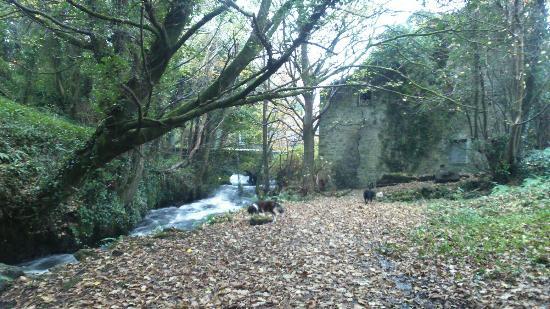 The Abbey Mill : DSC_0378_large.jpg