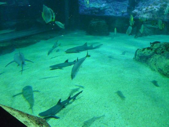 aquarium des requins picture of aquarium de biarritz biarritz tripadvisor