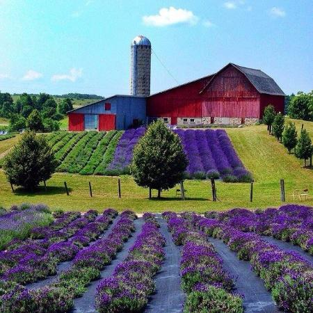 Lavender Hill Farm Boyne City 2018 All You Need To
