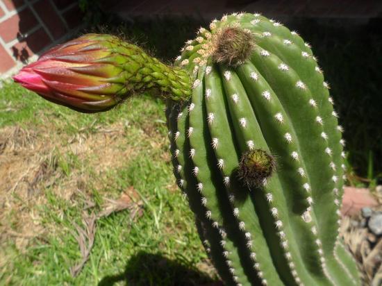Las Marias Hotel Boutique: Cactus