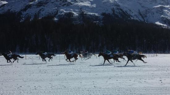 St. Moritz, İsviçre: White Turf, gara