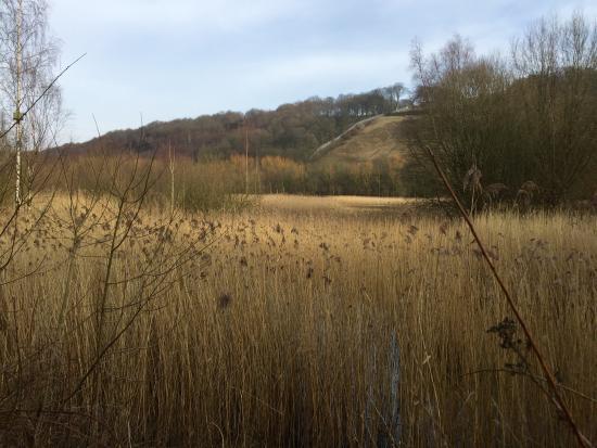 Cromwell Bottom Nature Reserve Photo