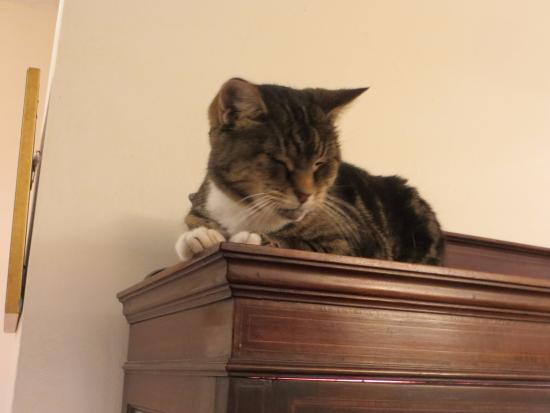 Berkswell, UK: Friendly cat