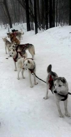 Wolfsong Adventures in Mushing: Such friendly and loving dogs!!!