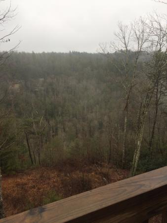 Red River Gorge   Bear Red River Gorge