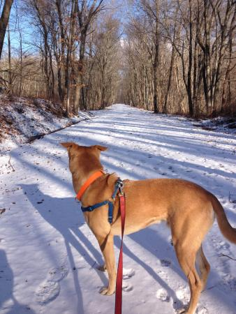 Pomfret, كونيكتيكت: Trail walking this winter.