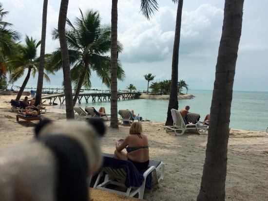 hotel pools sight picture of manathai koh samui lamai beach rh tripadvisor co za